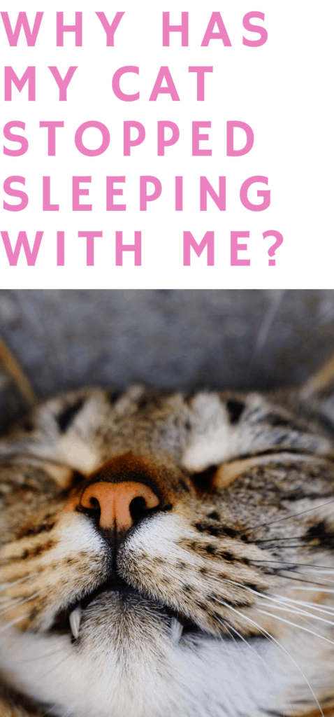 Why has my cat stopped sleeping with me?
