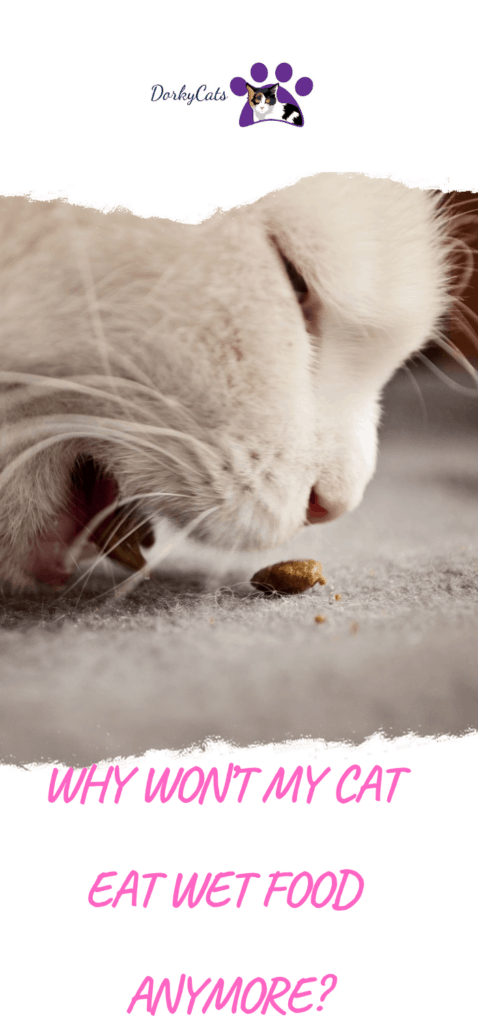 Why won't my cat eat wet food anymore?