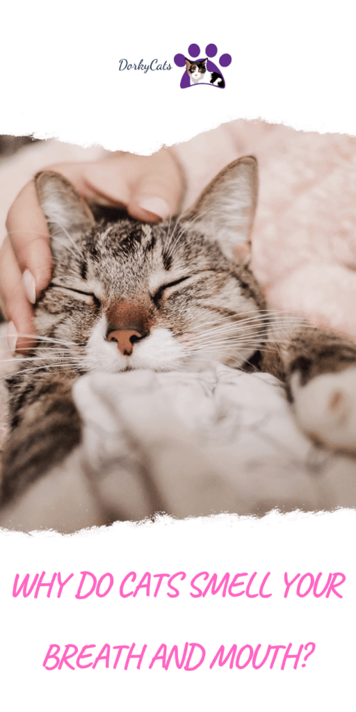 Why do cats smell your breath?