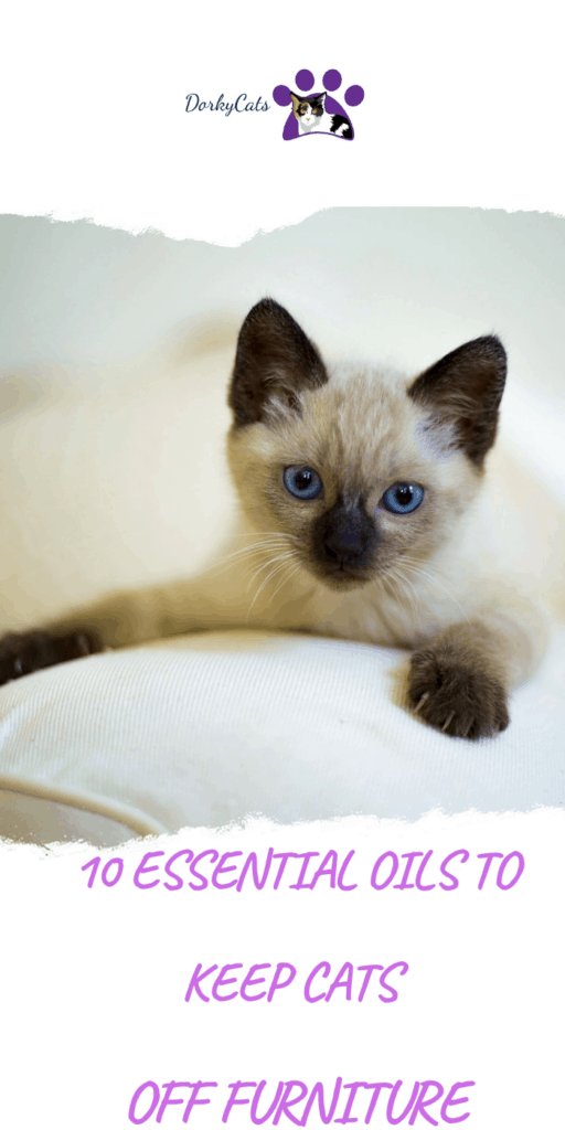essential oils to keep cats off furniture