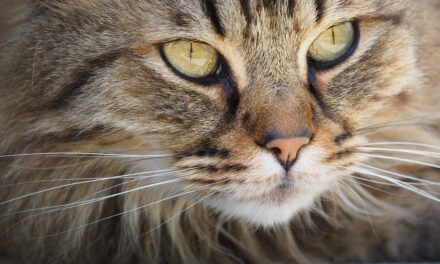 DO CATS CATCH COLDS? HOW TO DEAL WITH IT