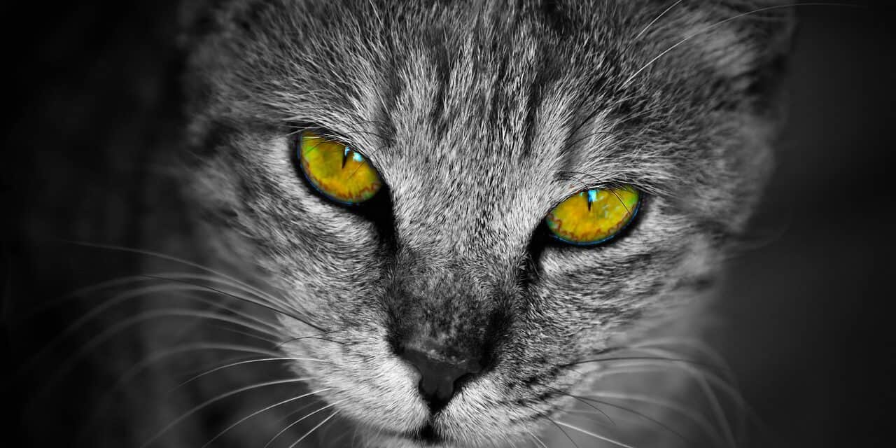 WHY DO CATS STARE AT YOU WHEN YOU SLEEP?