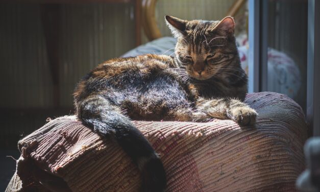 HOW TO GET A SHY CAT TO TRUST YOU? 10 TIPS