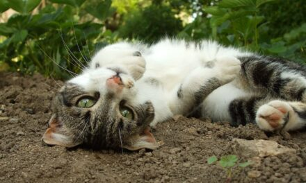 CRAZY CATS? WHY DO CATS ROLL IN DIRT?