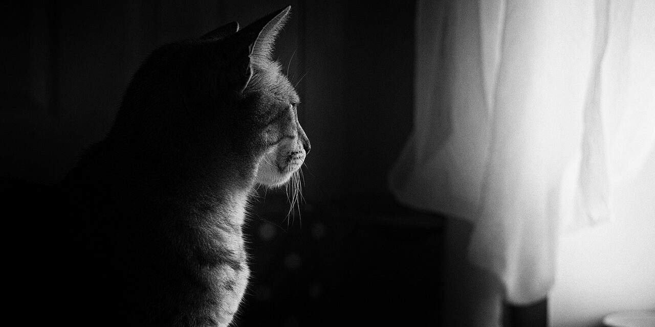 HOW LONG DOES IT TAKE FOR A CAT TO ADJUST TO A NEW OWNER?