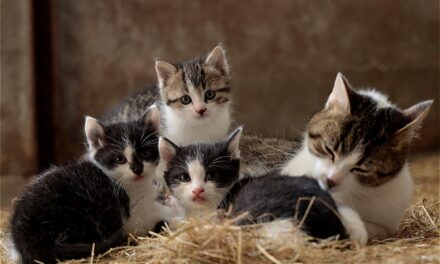 CAN CATS SHARE A LITTER BOX? HOW TO DECIDE