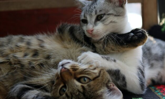 HOW LONG DOES IT TAKE FOR CATS TO GET ALONG?