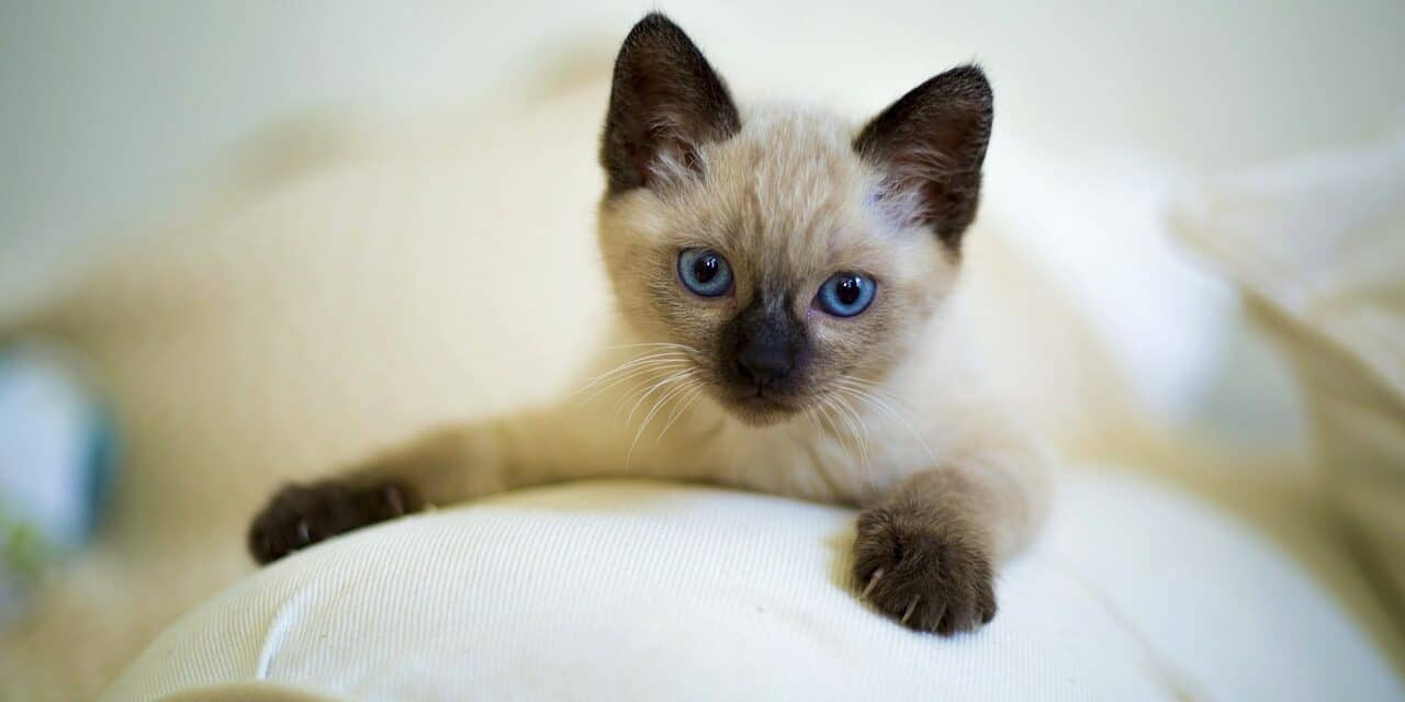 5 NON-TOXIC ESSENTIAL OILS TO KEEP CATS OFF FURNITURE