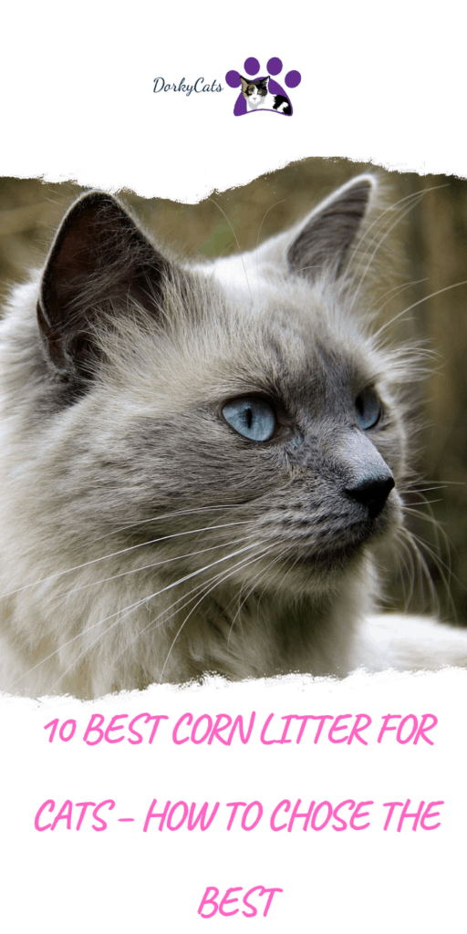 What is the best corn litter for cats?