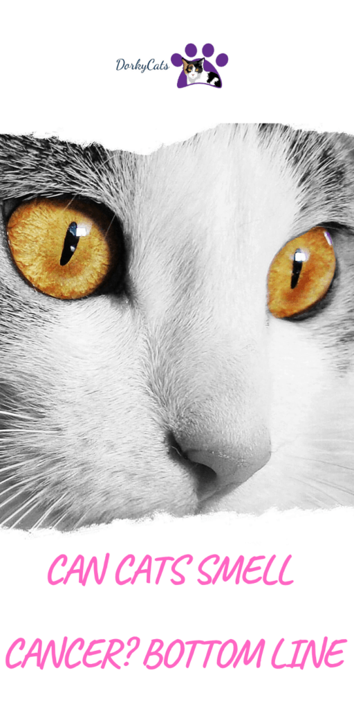 Can cats smell cancer?