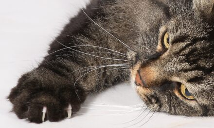 DO CATS CLAWS GROW BACK? HOW TO HELP YOUR CAT