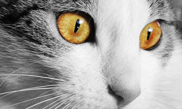CAN CATS SMELL CANCER? BOTTOM LINE