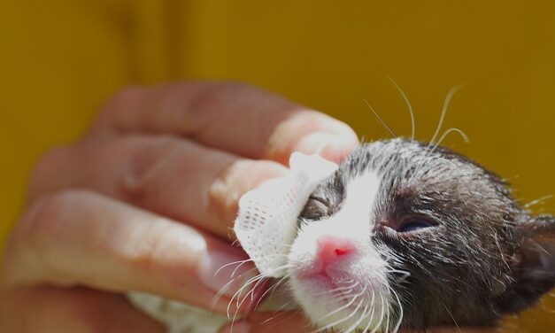WHAT ARE THE 11 BEST WATERLESS SHAMPOOS FOR CATS?