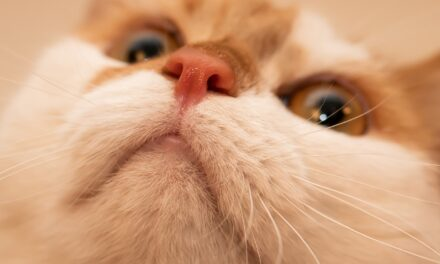 WHY ARE CATS NOSES WET? THE THRUT ON WET NOSES