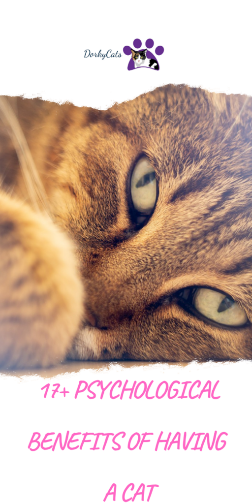 What are the psychological benefits of having a cat?