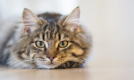 HOW OFTEN DO CATS POOP AND PEE? QUICK GUIDE