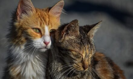 CAN CATS BE AUTISTIC? BOTTOM LINE