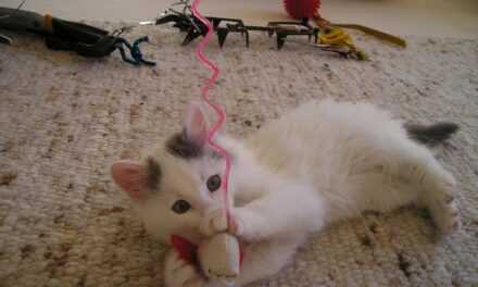WHY DO CATS EAT PLASTIC? 3 TOP REASONS AND REMEDIES
