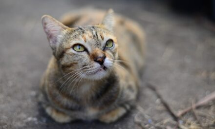 CAN CATS HAVE DOWN SYNDROME? HOW TO FIGURE IT OUT?