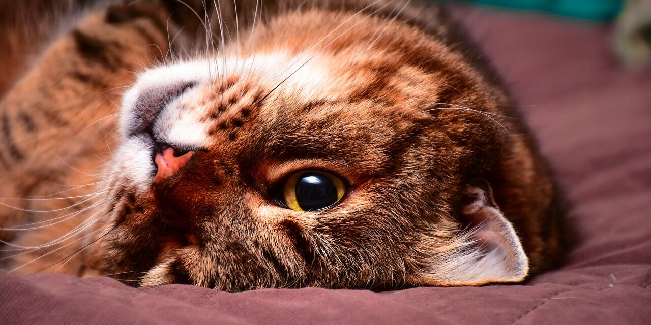HOW TO KEEP CAT POOP FROM SMELLING?