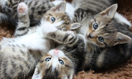 DO MALE CATS RECOGNIZE THEIR OFFSPRING?