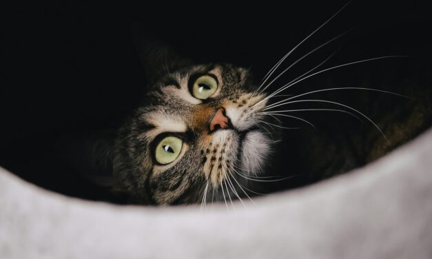 ARE TEMPTATIONS TREATS BAD FOR CATS? THE REAL TRUTH