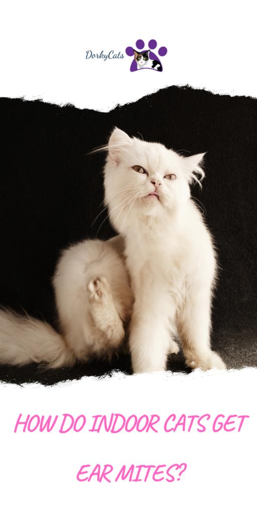 HOW DO INDOOR CATS GET EAR MITES