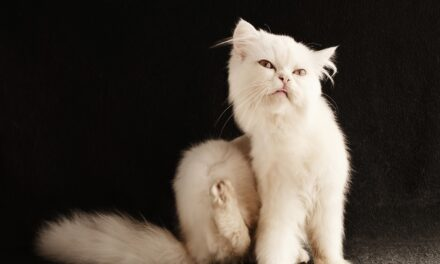 HOW DO INDOOR CATS GET EAR MITES? AND HOW TO GET RID OF THEM