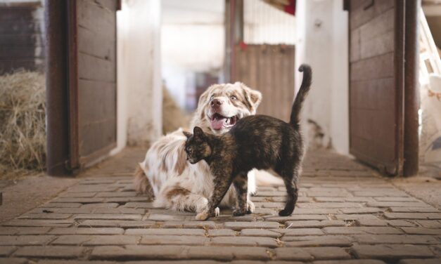CAN CATS AND DOGS MATE WITH EACH OTHER?