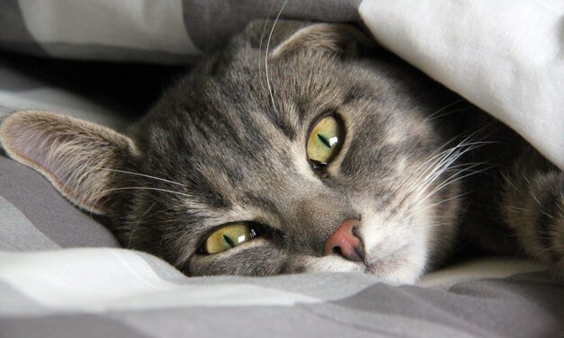 WHY DOES MY CAT SLEEP UNDER THE COVERS? 7 FUNNY REASONS