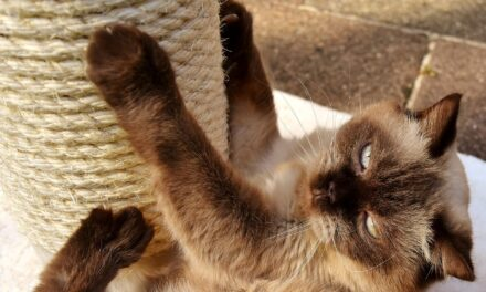 HOW TO STOP CATS FROM SCRATCHING FURNITURE – 4 WAYS