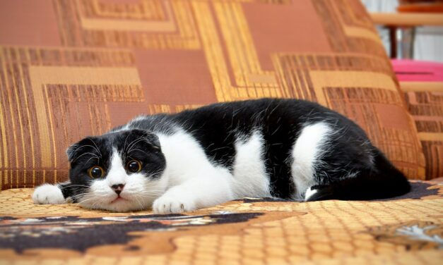 DO CATS EAT MOSQUITOS? 10 USEFUL TIPS