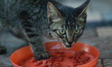 CATS ONLY LICK WET FOOD. IS IT GOOD OR BAD?