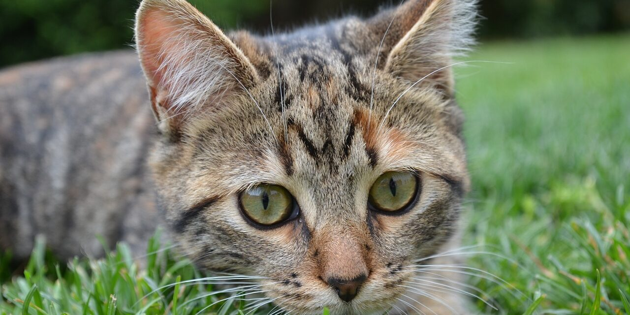 WILL INDOOR CATS SURVIVE OUTSIDE?